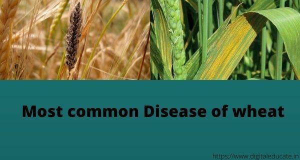 Disease-2Bof-2Bwheat.jpg